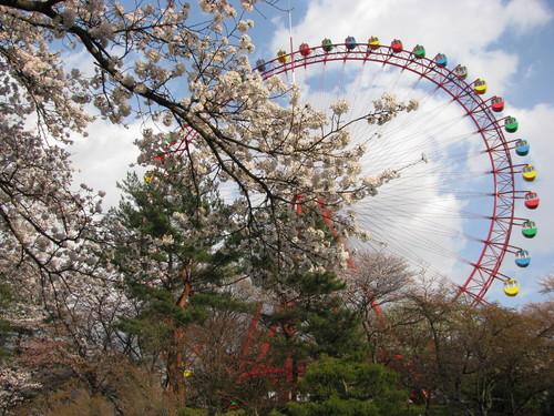 西武園の桜