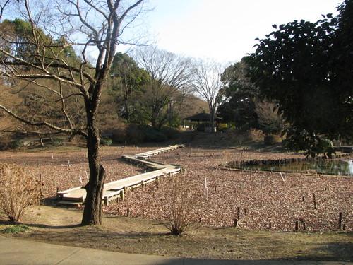 昭和公園1