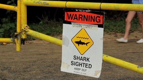bts-hi-fatal-shark-attack-00005217-story-top