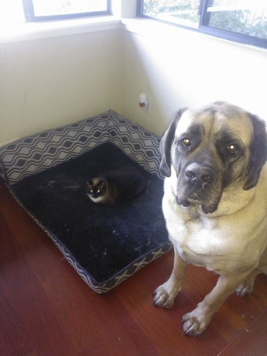 dog-beds2