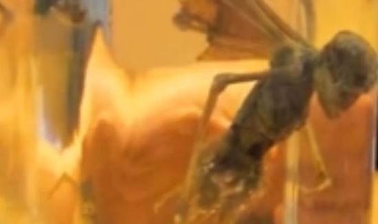 Winged-Creature-690568