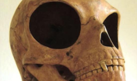 Sea-Land-skull-690920