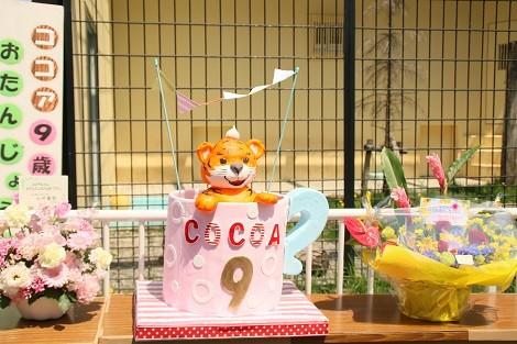 ココア9歳のBDケーキ