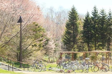 桜と自転車