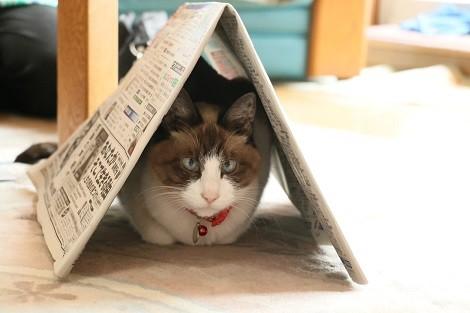 ミミー新聞ハウス