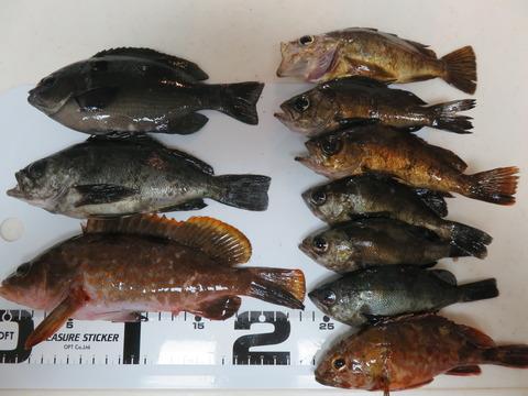 12月20日 南あわじ市土生漁港でエビ撒き釣り