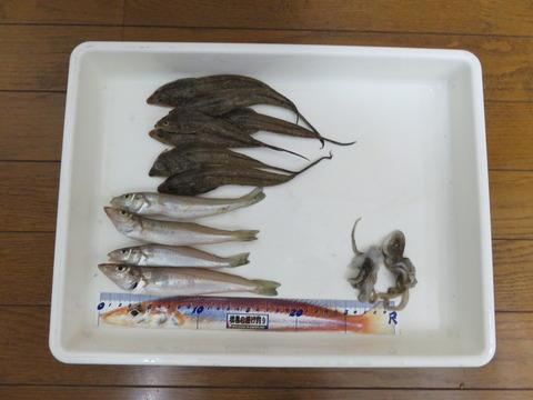 9月22日 赤穂大塚海岸でキス釣り