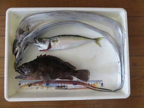 2018年11月17日 南あわじ市土生漁港でタチウオ釣り