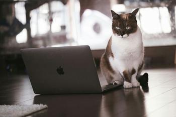 cat126IMGL6393_TP_V1