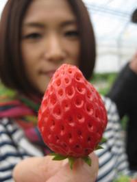 イチゴ狩り 037
