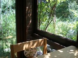 カフェカエル 室内から庭を見る