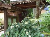 ラカシータ 報国寺