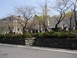 ファイブ カフェ 葉桜の段葛