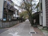 もぐら食堂 清泉小前の桜並木