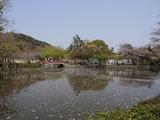 ファイブ カフェ 源氏池の桜