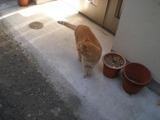 カフェーマル 島猫