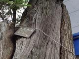 かやの木邸 保存樹木