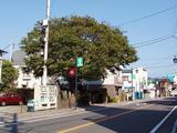 パパノエル 4庚申塚の木