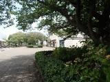 ドラキア 桜プロムナード2
