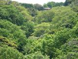 らい亭 緑の山
