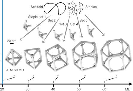 DNApolyhedra1