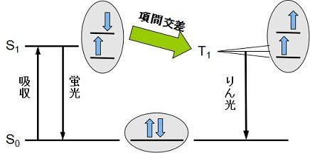 Kamitsubo47_fig1