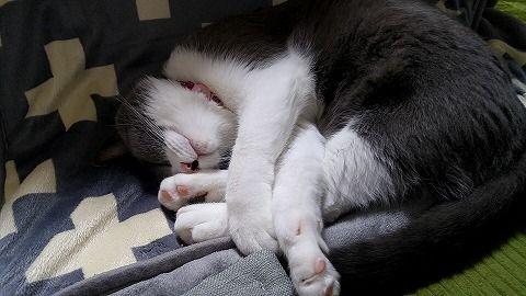 2017‐01‐03丸くなる猫