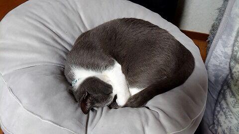 20200215丸くなる猫