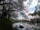 公園東北濠05年04月26日07時54分.jpg