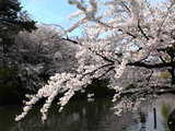 鶴岡公園北濠05年04月26日07時44分.jpg
