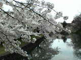 鶴岡工業前05年04月26日08時37分.jpg