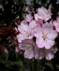 May14_1530.jpg