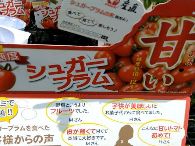 Jardinのミニトマト高糖度シュガープラム2021年