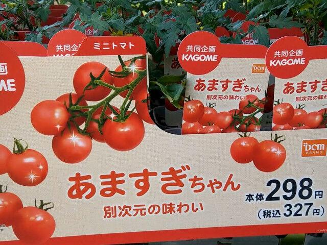 KAGOMEとDCM共同規格のミニトマトあますぎちゃん2021年