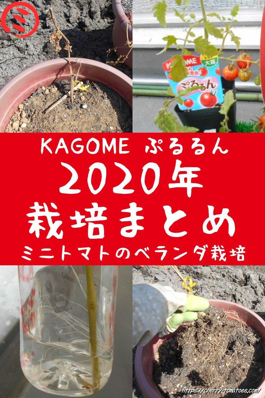 ミニトマトの老化苗KAGOMEぷるるんをプランターでベランダ栽培2020年のまとめ