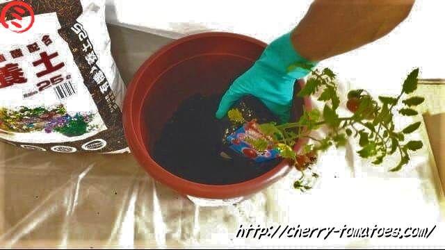 10号鉢に土を少しいれたところ