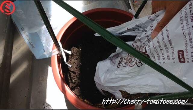 ミニトマトヘレナ苗の鉢に土を入れる2020年