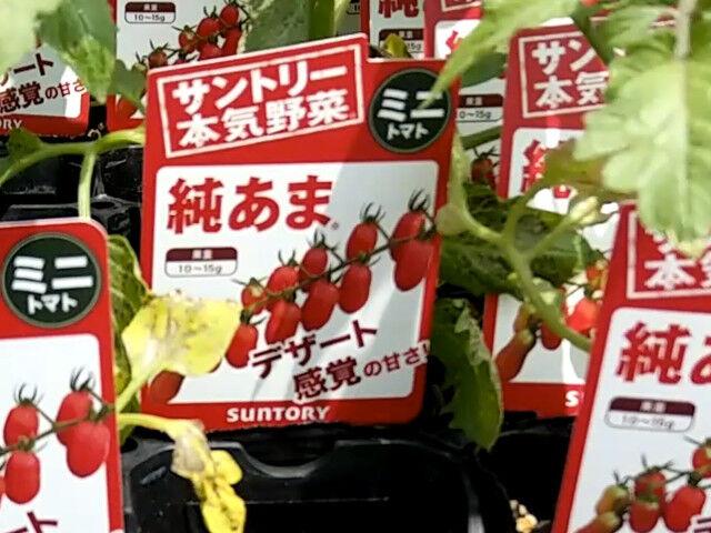 SUNTORY本気野菜のミニトマト純あま2021年