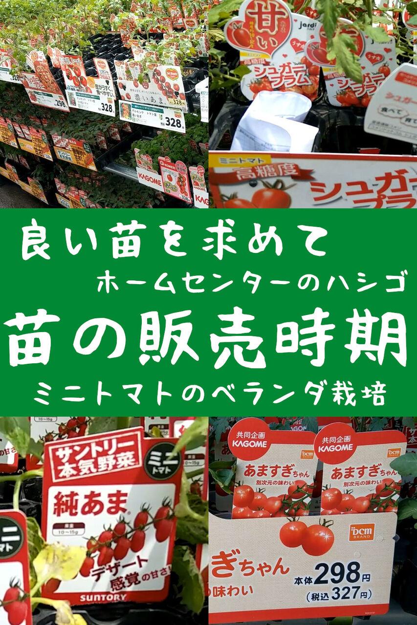 ミニトマト苗の販売時期!良い苗を求めてホームセンターのハシゴ2021年の春