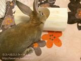 今日のうーちゃん・トンネル編