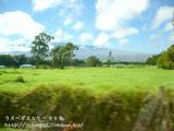 ワイメア周辺の牧草地