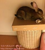 今日のうーちゃん・箱寝編