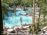 フラミンゴのプール
