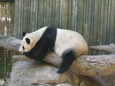 パンダの丸焼き体勢