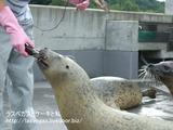 夏の旭山動物園旅行・動物園その1