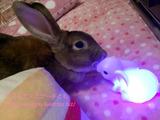 今日のうーちゃん・呼べば来るよ&光るウサギさん編
