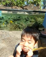 いとこ甥と水槽