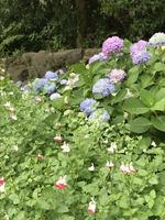 花の国 5月末
