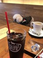 DOGカフェ