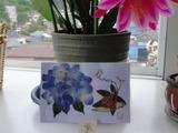 押し花 紫陽花
